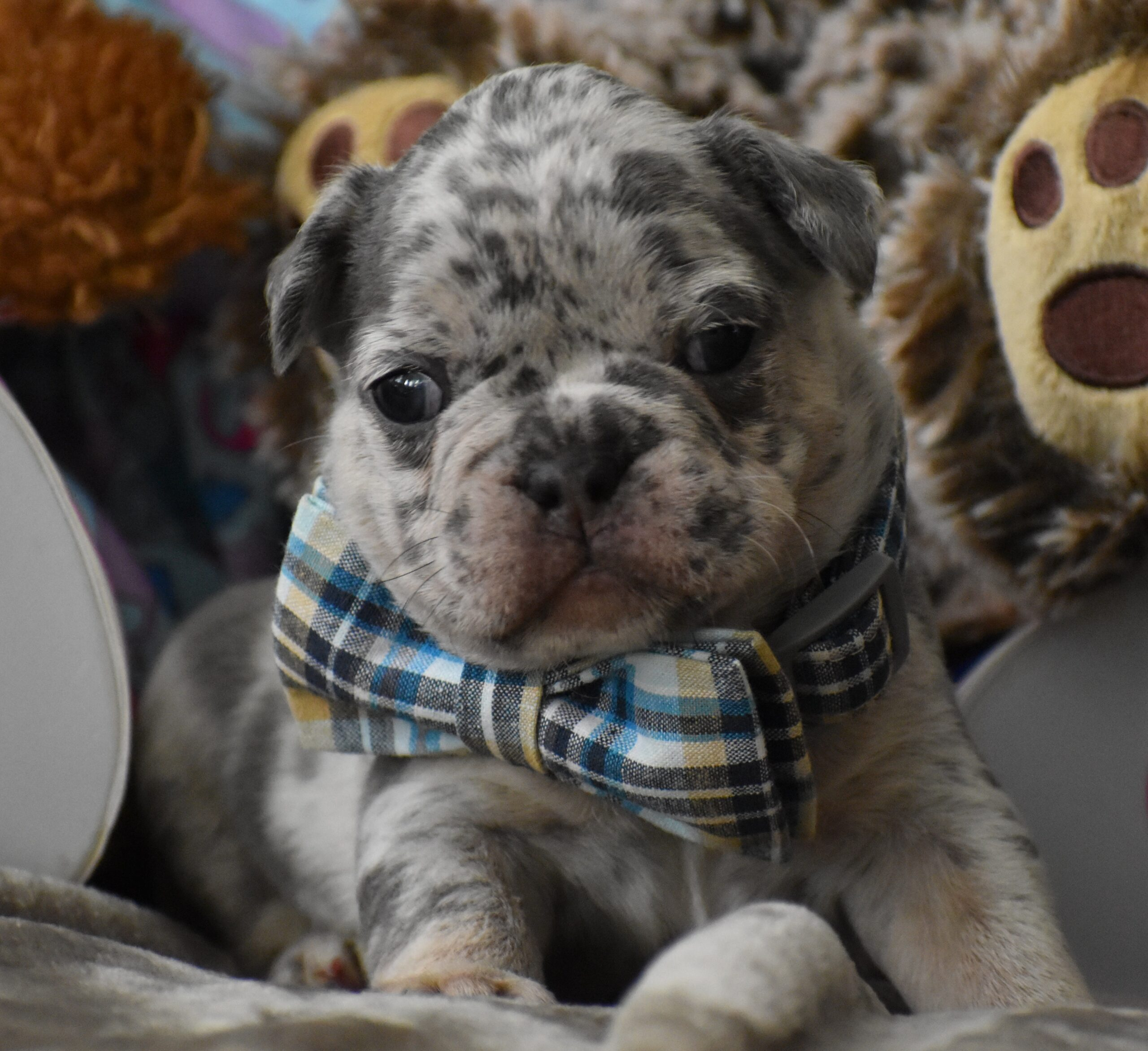 Multi Color Puppy with Teddy Bear
