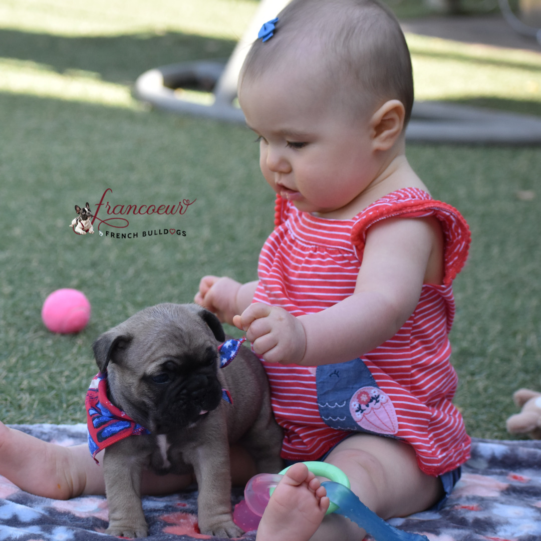 baby playing with french bulldog puppy